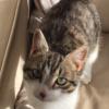 Elveszett cica
